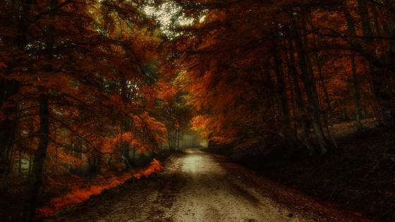 Dirt road across the fall forest wallpaper