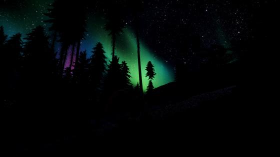 Polar lights above the pine forest wallpaper