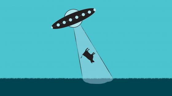 Cattle alien abduction wallpaper