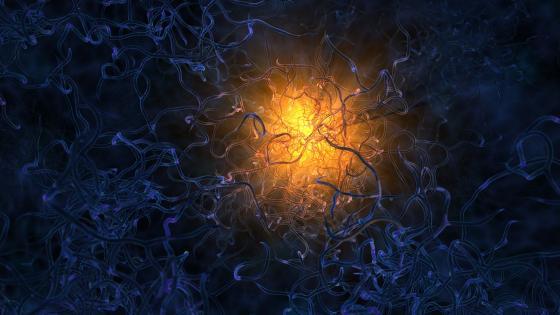 Neuron sturcture wallpaper