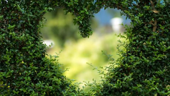 Heart bush wallpaper