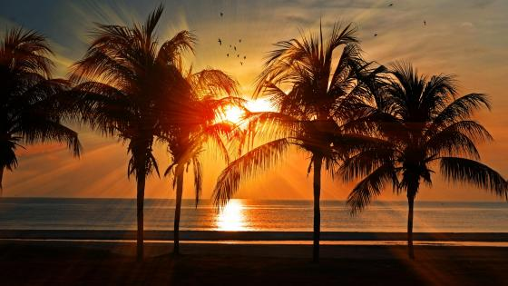 Sunset and Palm Trees wallpaper