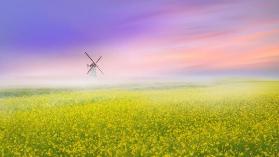 Windmill in the canola field wallpaper