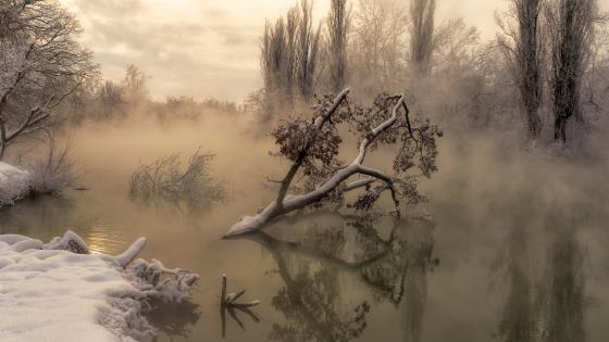 Foggy winter swamp wallpaper