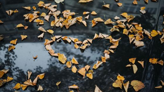 Leaf heart on windscreen wallpaper