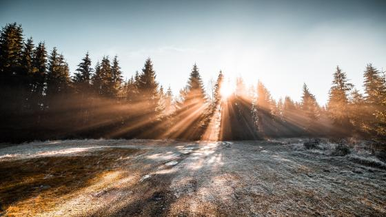 Frozen winter morning sunlight wallpaper