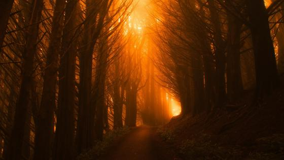 Forest trail at sunset wallpaper