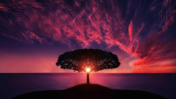 Solitary tree in the purple sunset wallpaper