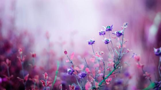 Blurred flowers wallpaper