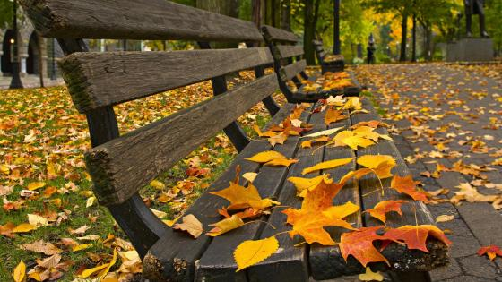 Autumn leaves on a park benches wallpaper