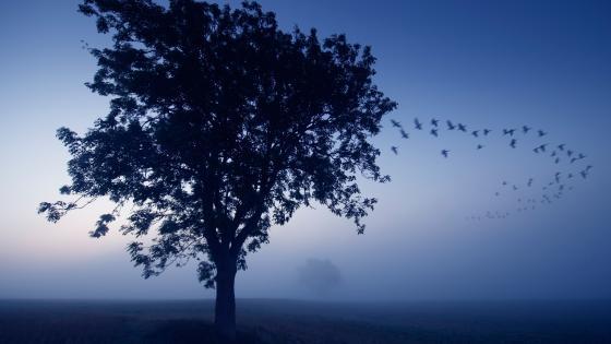 Lone tree in the mist wallpaper