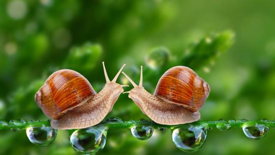 Snails - Macro photography wallpaper