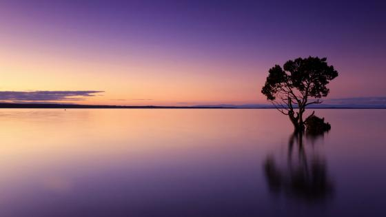 Solitary tree reflection wallpaper
