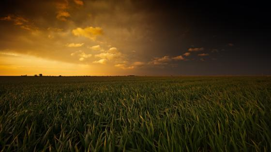 The Field of Dreams wallpaper