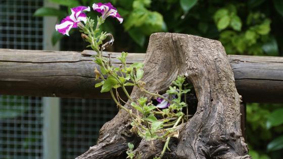 Flower in a stump wallpaper