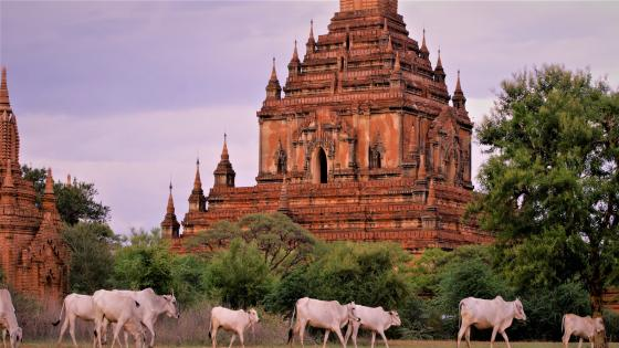 Ancient Pagoda of Bagan (Myanmar) wallpaper