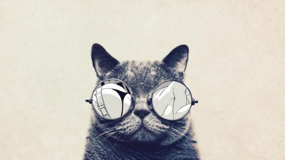 Hipster cat wallpaper