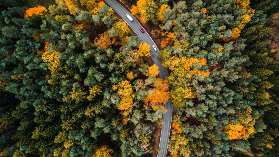 Road in the fall forest from above wallpaper