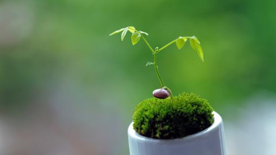 Green plant macro photo wallpaper
