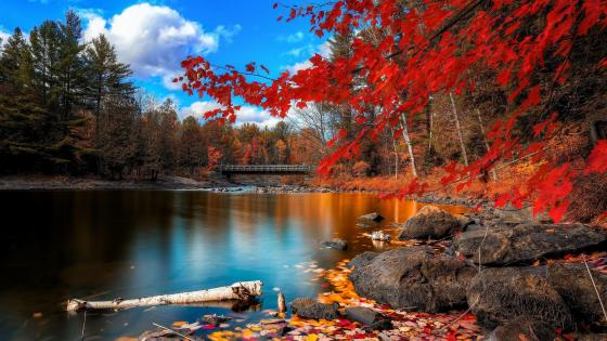 Fantastic autumn nature wallpaper