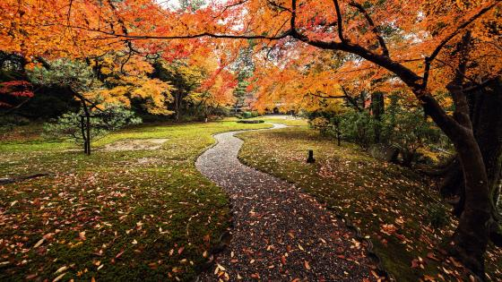 Autumn Leaves in Yoshikien Garden, Japan wallpaper