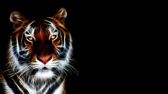 Glowing tiger wallpaper