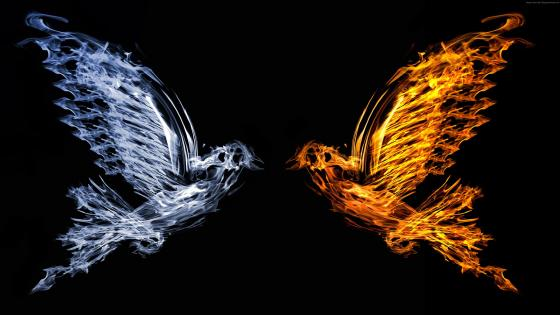Ice and fire birds wallpaper