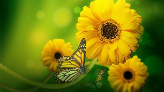 Yellow flowers and butterflies wallpaper