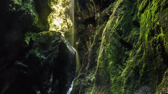 Waterfall on mossy rocks (New Zealand) wallpaper