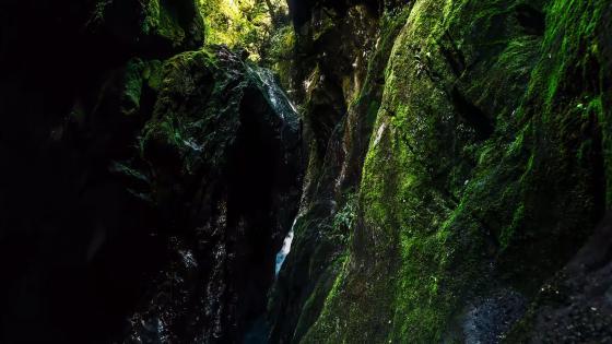 Mossy rocks wallpaper