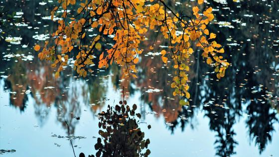 Peaceful fall nature wallpaper