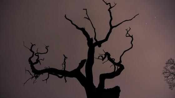 Tree silhouette wallpaper