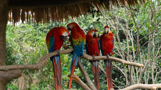 Parrots at the zoo wallpaper