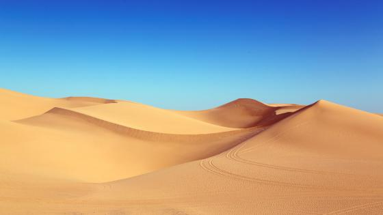 Desert dunes under the blue sky wallpaper