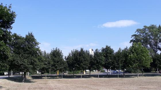 Park in Győr wallpaper