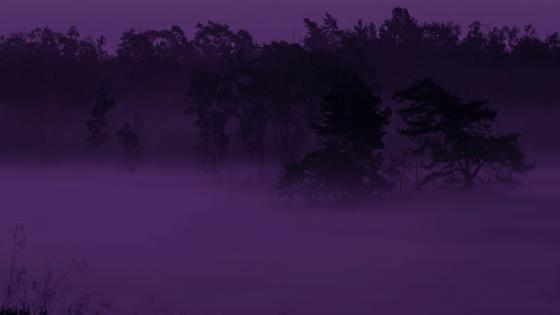 Purple haze wallpaper