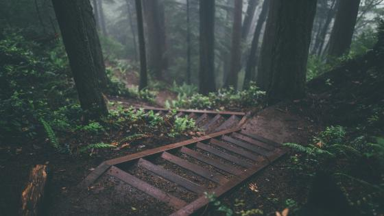 Rainy Forest wallpaper