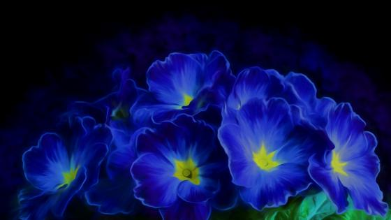 Blue primrose painting art wallpaper