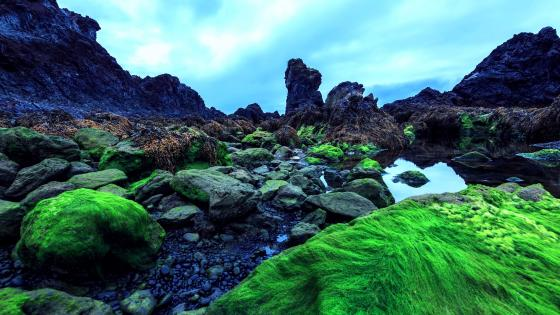 Mossy Iceland wallpaper
