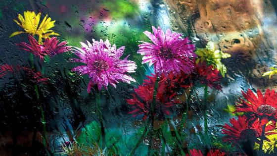 Colorful flowers in the rain wallpaper