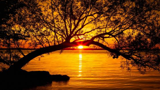 Beautiful orange sunset wallpaper