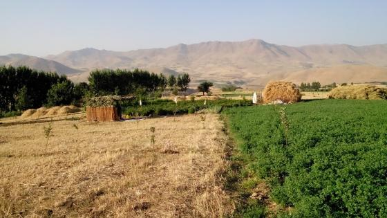 Kurdish farm wallpaper