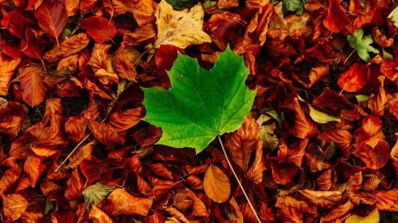 The last green leaf wallpaper