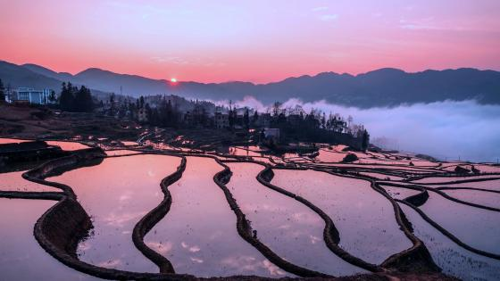 Rice terraces wallpaper
