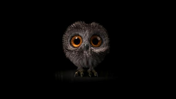 Cute little owl wallpaper