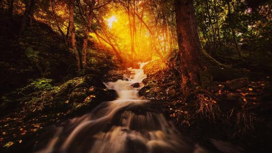 River in a forest wallpaper