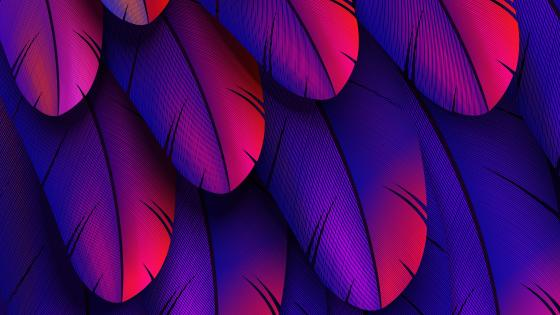 Purple feathers wallpaper