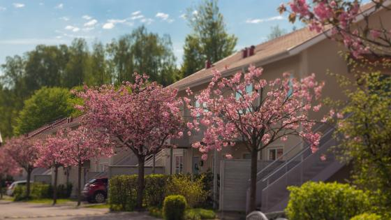 Picturesque suburdan Life in Scandinavia wallpaper