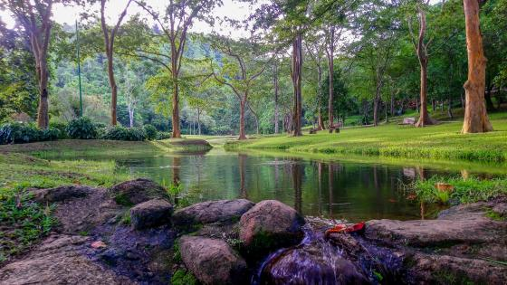 Small lakes under the greeny shades wallpaper