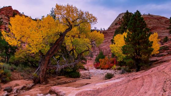 Beauty of Zion National Park wallpaper